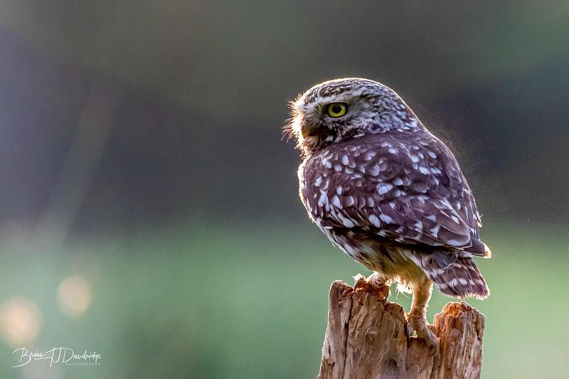 The Little Owl Shoot-6028.jpg