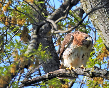 Spring Birding 2018
