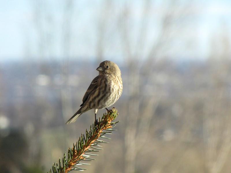birds (174).jpg