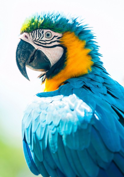 Iquitos_14.jpg