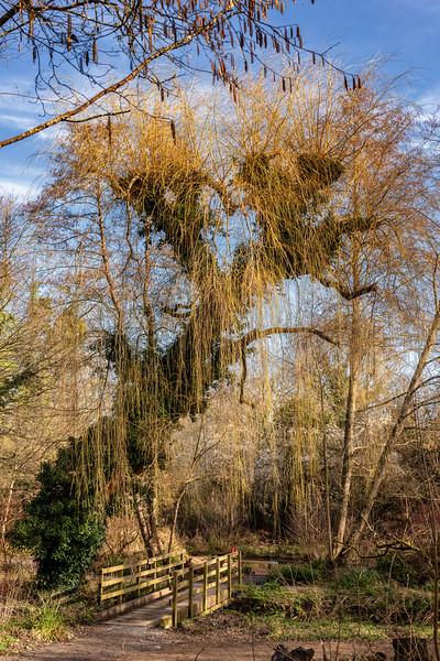 Woods Mill-7.jpg