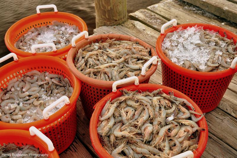 U.S.A.  shrimp-