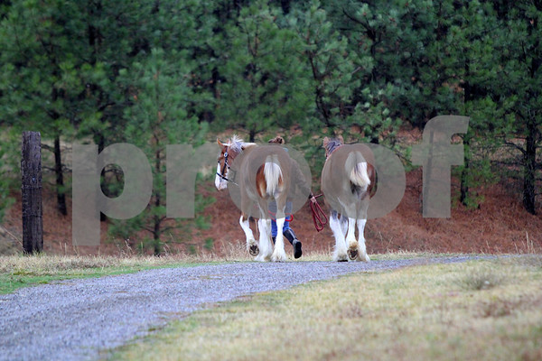 Liberty Lake Clydesdales