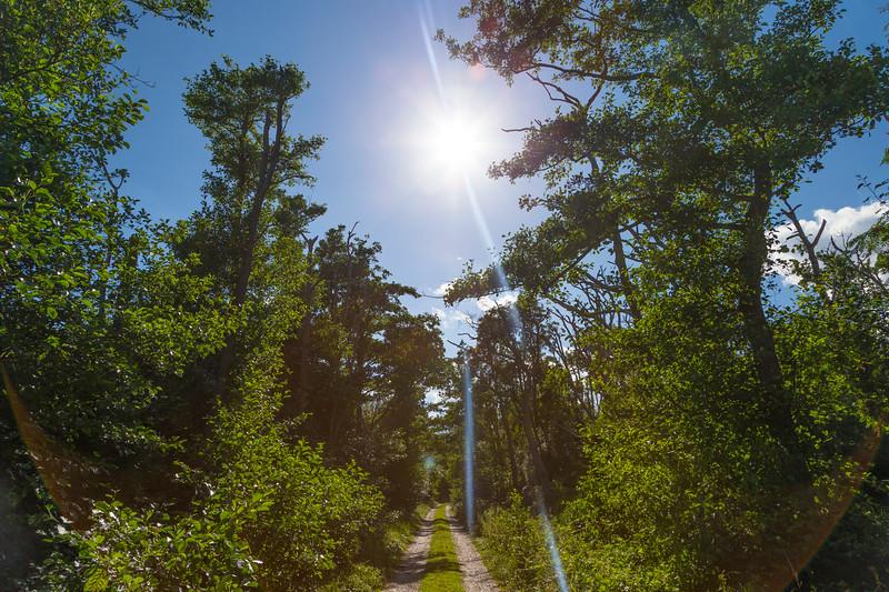 Danmark-Miljøer-Endelave-2013-07-31-_A7X0105-Danapix.jpg