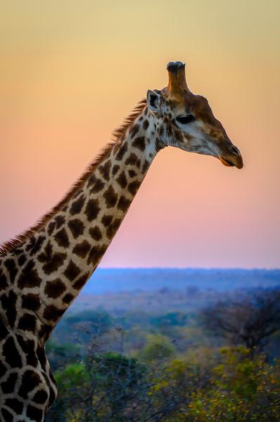 Zuid Afrika 2015 041.jpg