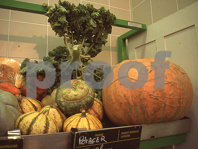squash-tiny-is-trendy-but-big-is-good-too