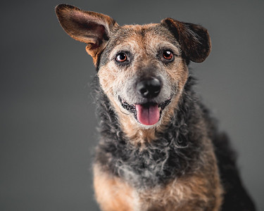 Cadence Doggy Portraits