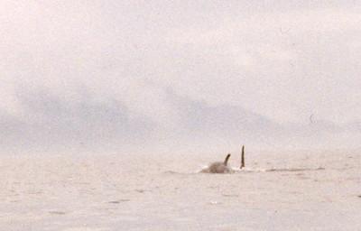 Orca Kayak Trip - 1997