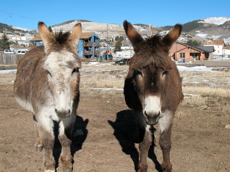 Dynamic Donkey Duo