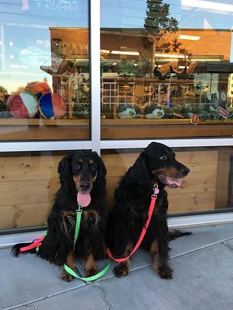Apartment Dogs -- June 2016 +