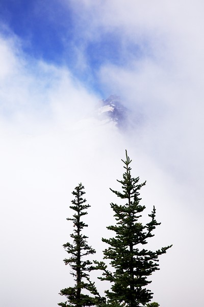 Fir trees and Little Tahoma peak in clouds. Mount Rainier National Park, Washington