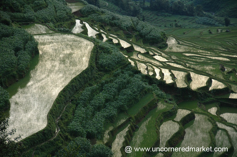 Terraced Rice Fields - Yuanyang, China