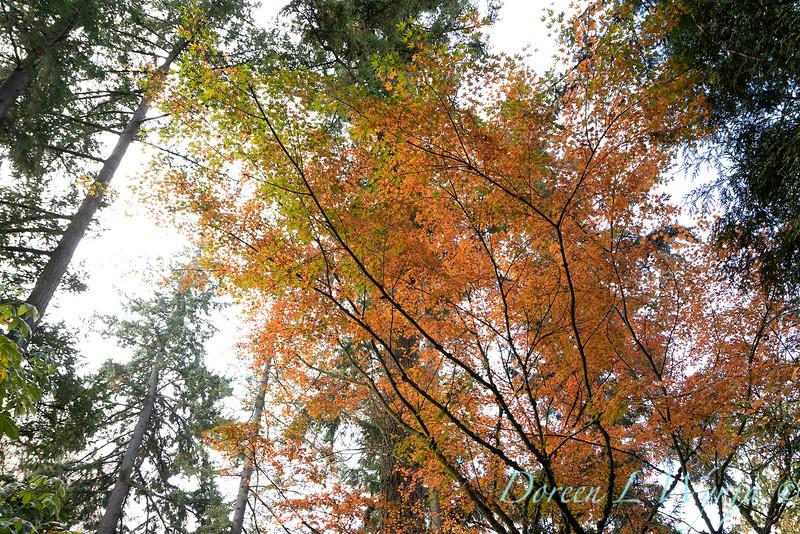 Dietrick fall garden_2110.jpg