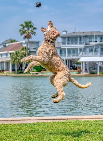 Kona goes to Galveston!
