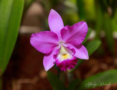 Orchids 2020