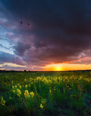Fine Art natuur foto van een veld in de zomer met een prachtige dramatisch wolkenlucht bij zonsondergang met vlasbekjes en twee spreeuwen in de lucht.