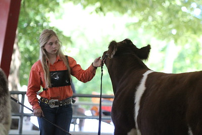 Showmanship & Steers - Ring Shots