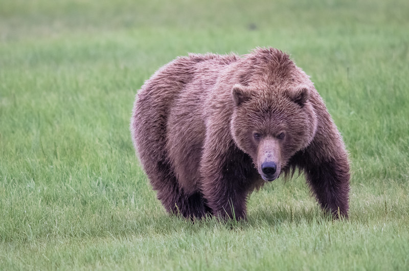 Alaska-8264.jpg