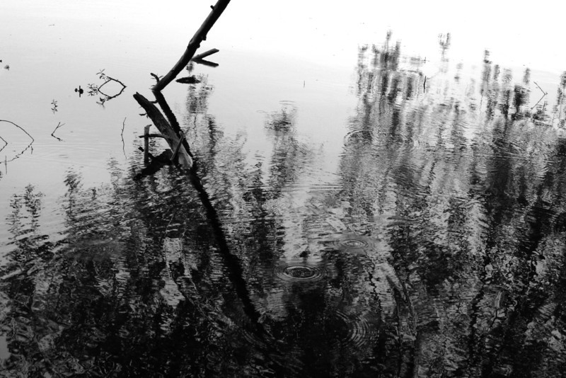 070628-090BW (Abstract; Driftwood, Grass, Lake).jpg
