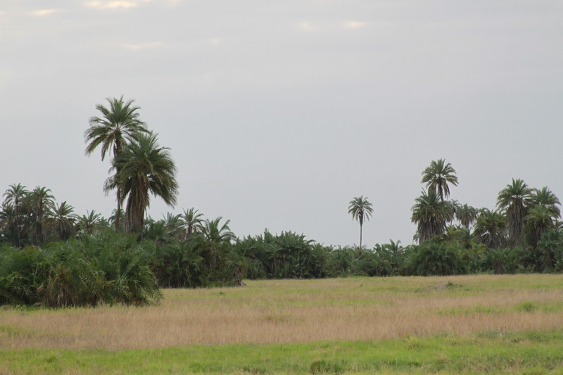 Kenya 2019 #2 348.JPG