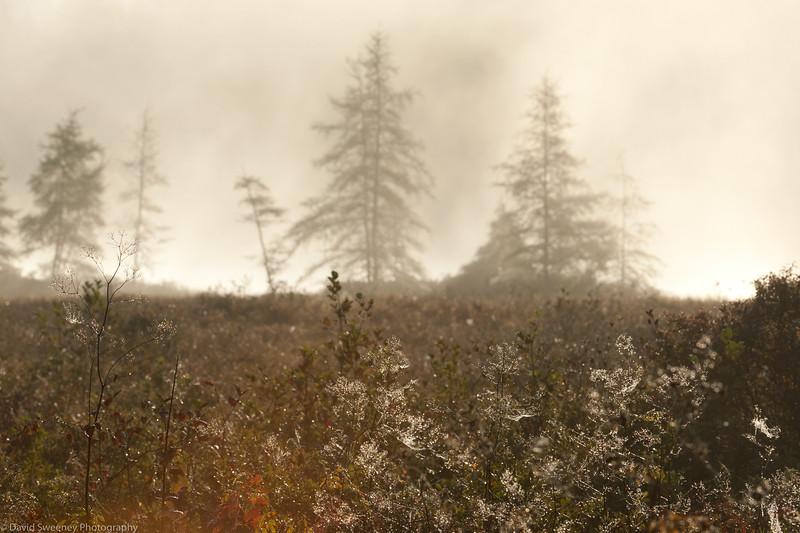Archers Mist & Dew.jpg