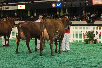 Winter Natl Milking Shorthorn Show 2016