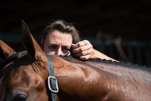 Misko Quarter Horses