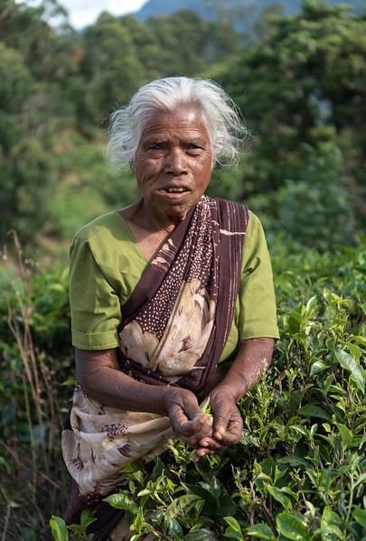 Tea Picker at Plantation near Ella