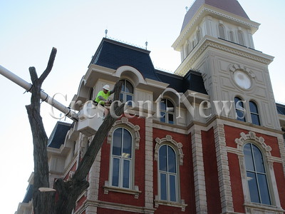 11-15-16 NEWS Tree at courthouse