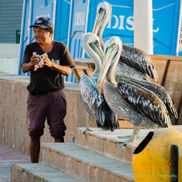 Paracas Ballastas -3760.jpg