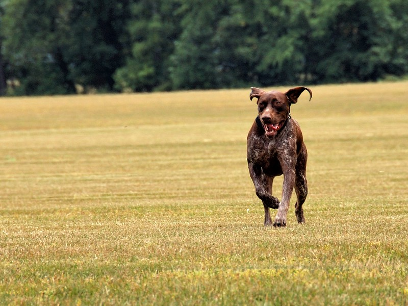 Morgen on the Run.jpg