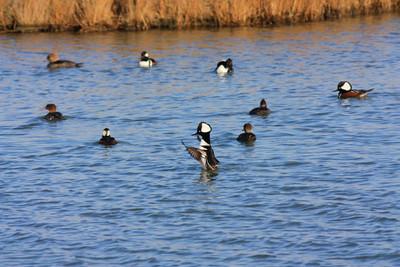 Forsythe National Wildlife Refuge Dec 3 2010