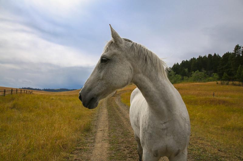 Horses 17.jpg