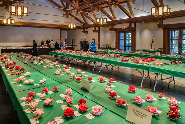 Camellia Show - La Canada-Flintridge, CA