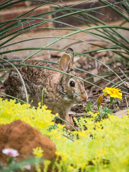 Bunnies and Lizards-4290657.jpg