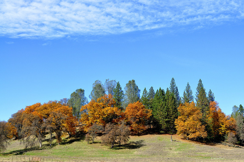 foothill's colors 11-25-2012.jpg