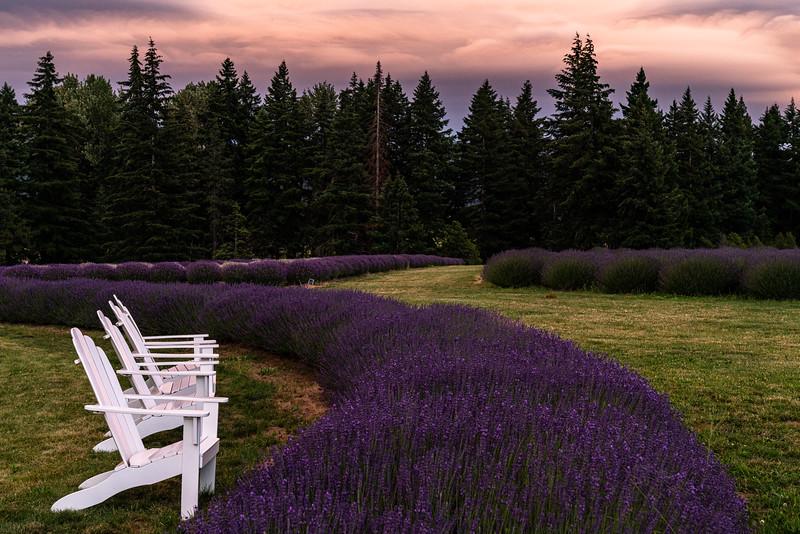 LavenderValleyJuly 2020071113563_.jpg