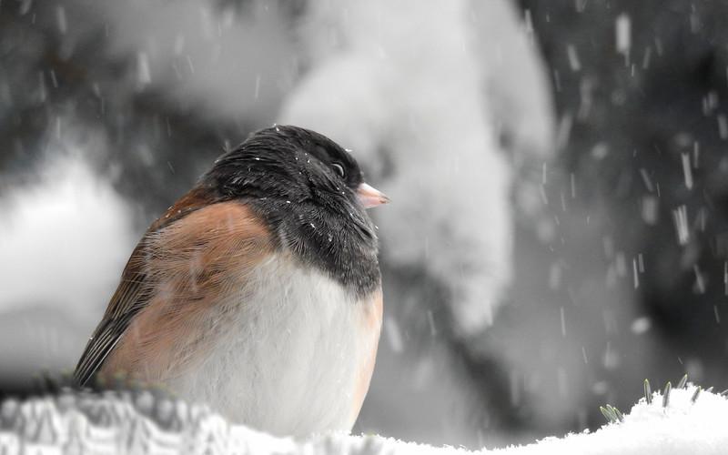 birds (228).JPG