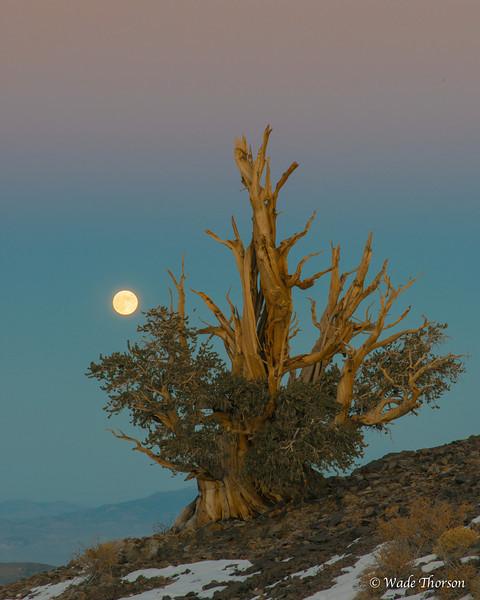 Eastern Sierras 13-0951.jpg