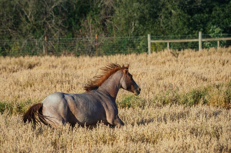 Wild horses, Return to Freedom Sanctuary