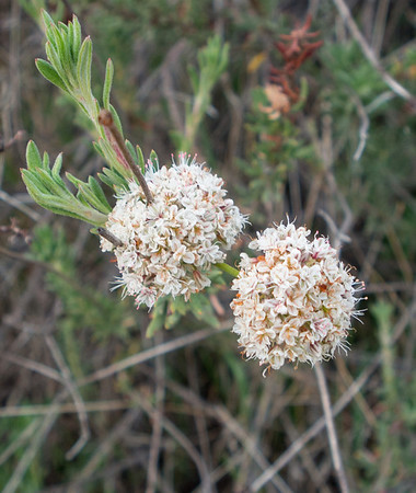 Crafton Hills - Flowers 3.29.14