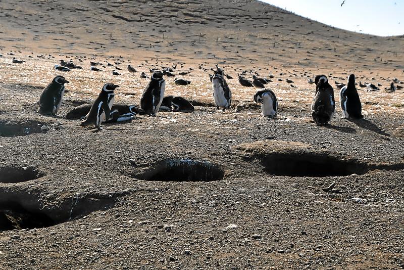 Penguin_Colony_038.jpg