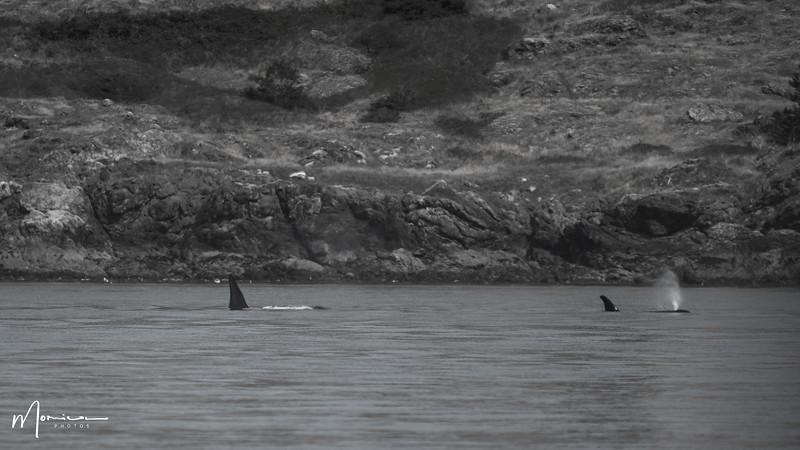 2019-08-31 - Whale Watching-1072_edit.jpg