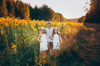 Sunflowers Blackwood