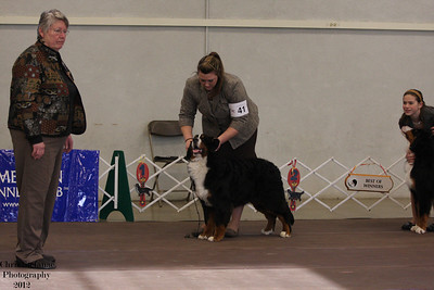 Sweeps 6-9 mos Puppy Dog