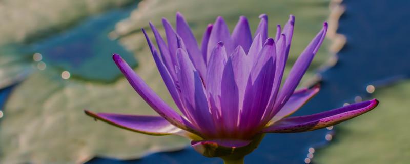 Lily  Pond 47