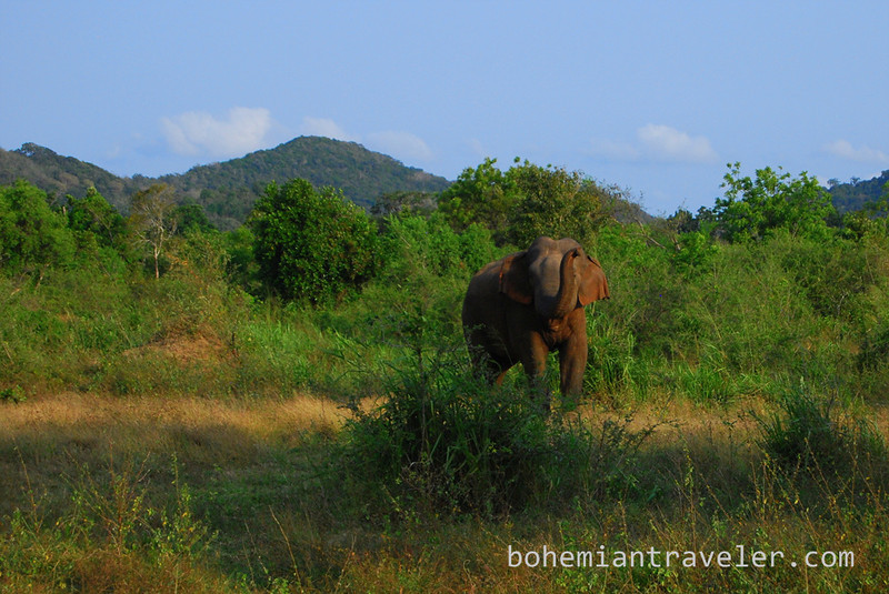elephant in Habarana Eco Park (8).jpg