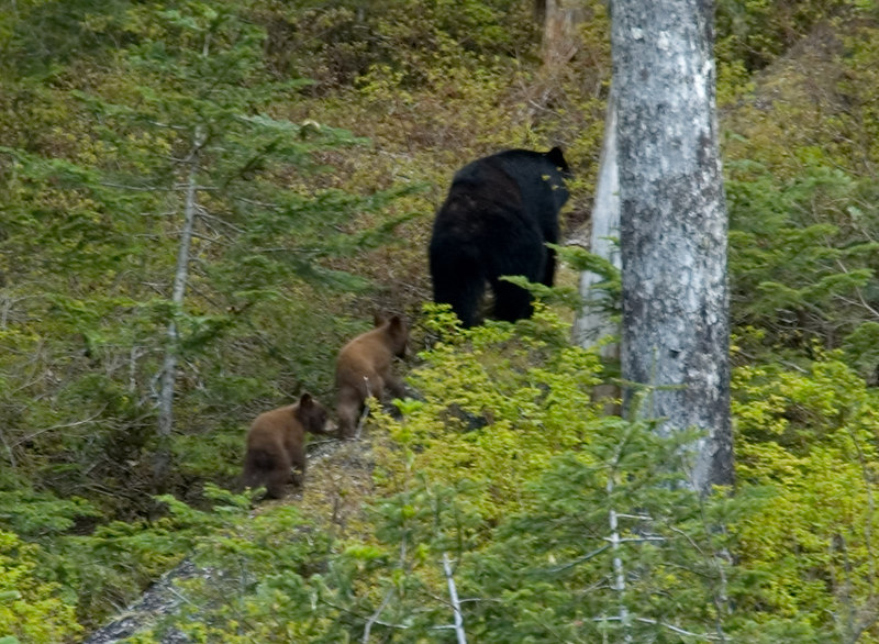 Bears_7.jpg