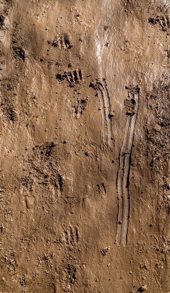 Deer Tracks in Slippery Mud #2