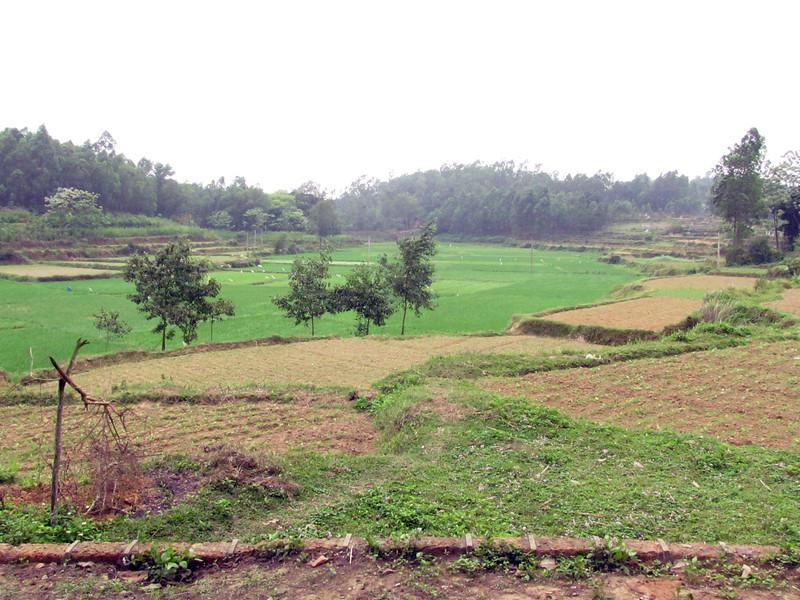 04-Rice field opposite temple
